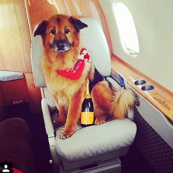 animal de compagnie a bord d'un jet privé